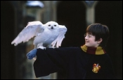picture from harry potter